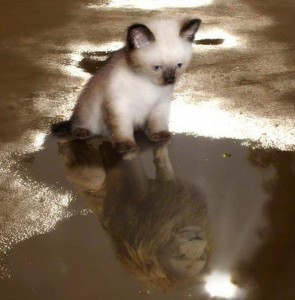 A Kitten's Hope in Reflection